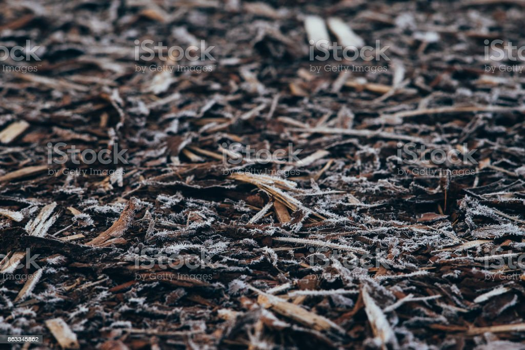 Natural bark covered by morning frost stock photo