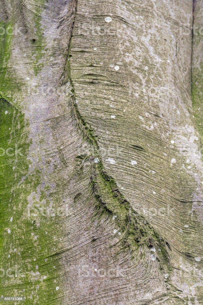 natural bark detail stock photo