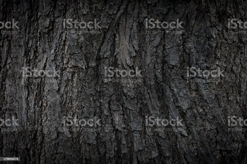 Natural Bark texture stock photo