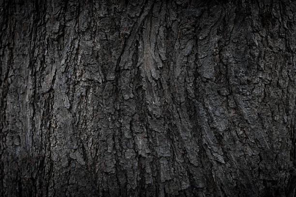 Natural Bark texture stock photo