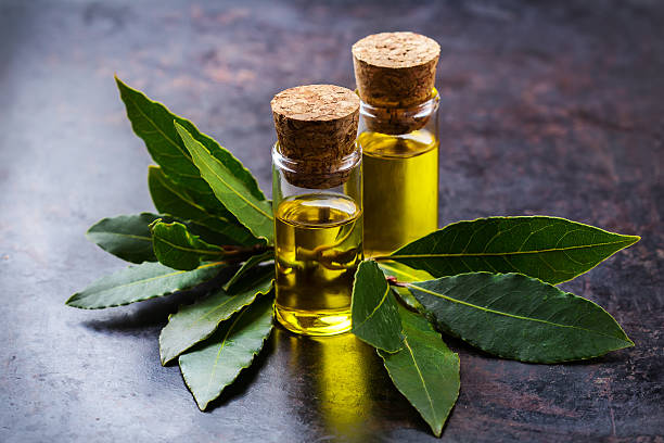 natural bay laurel essential oil for beauty and spa - alloro foto e immagini stock