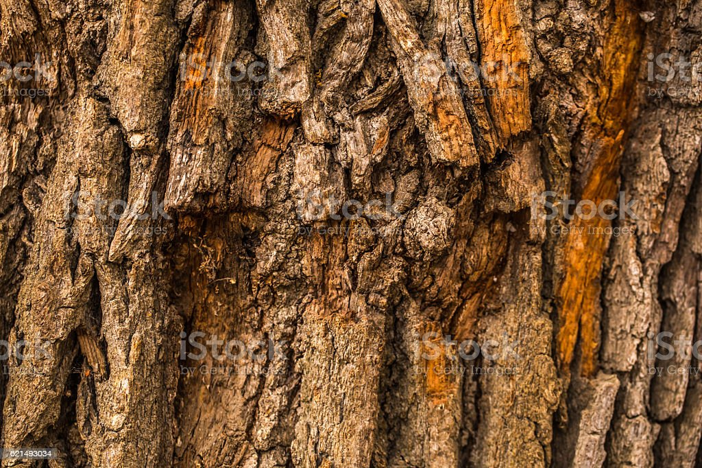 natural beautiful old wood texture Lizenzfreies stock-foto