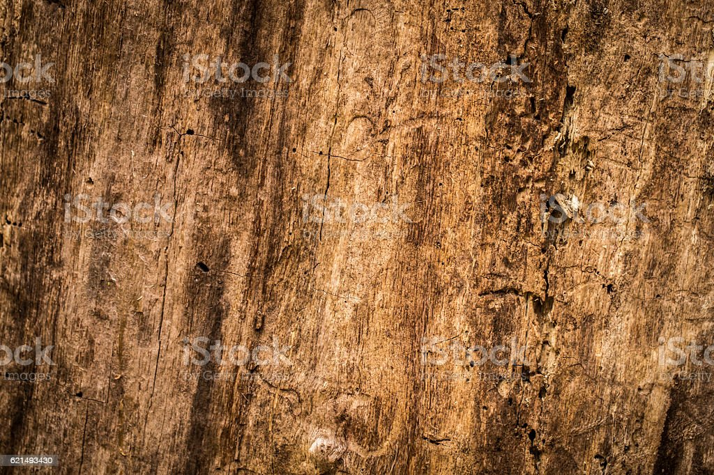 natural beautiful old wood texture photo libre de droits