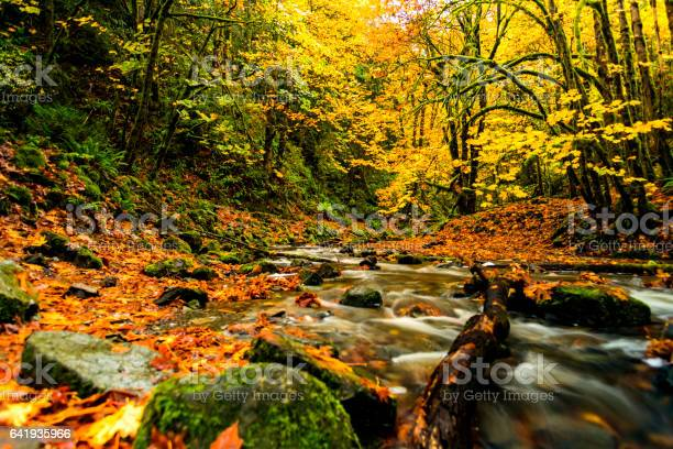 Photo of Natural Beauty of Vancouver Island series -  Amazing Autumn foliage near little Niagara falls in Goldstream Provincial Park 1.