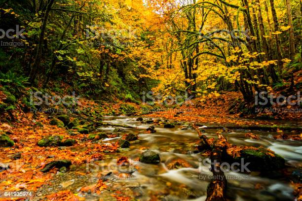 Photo of Natural Beauty of Vancouver Island series -  Amazing Autumn foliage near little Niagara falls in Goldstream Provincial Park 5.