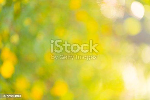 876018792istockphoto Natural bokeh background 1072846850