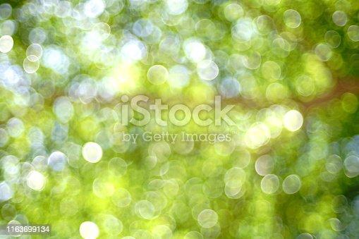 876018792istockphoto Natural bokeh in garden 1163699134