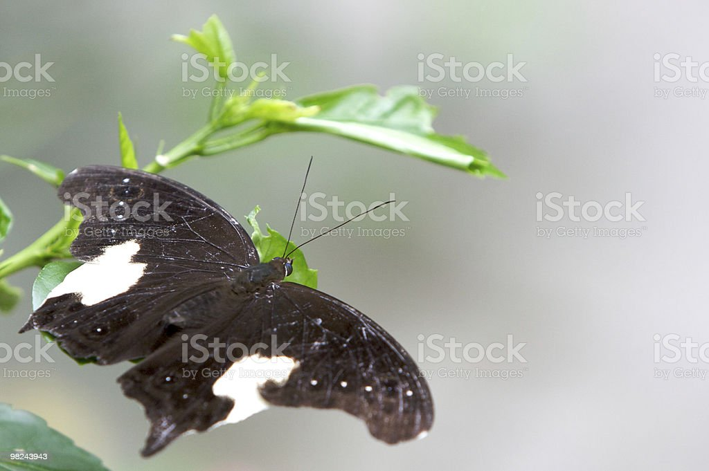Natural Butterfly royalty-free stock photo