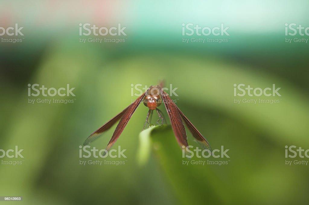 자연스럽다 나비 royalty-free 스톡 사진