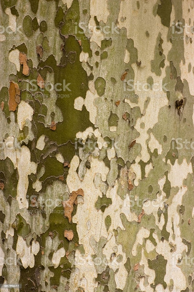 Natural Camouflage Pattern royalty-free stock photo