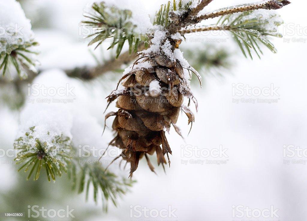 natural christmas tree ornament royalty-free stock photo