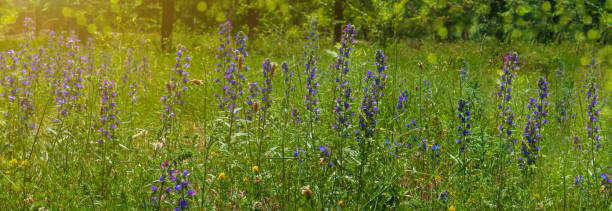 Natural colorful blooming website header purple flowers in the meadow picture id1255375623?b=1&k=6&m=1255375623&s=612x612&w=0&h=vq8hjemxrdwdctu89nukupjogdodgqjkql06cidyexi=