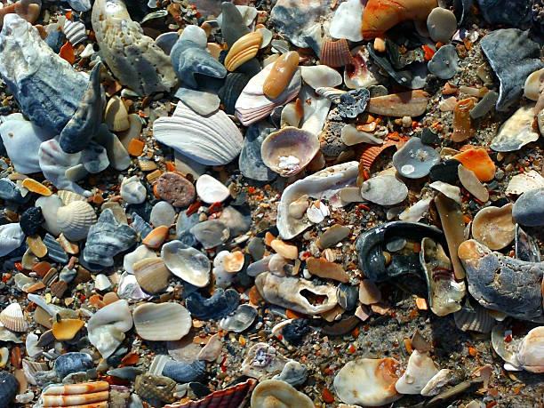 Natural Colorful Broken Shells, Wilmington Beach, North Carolina stock photo