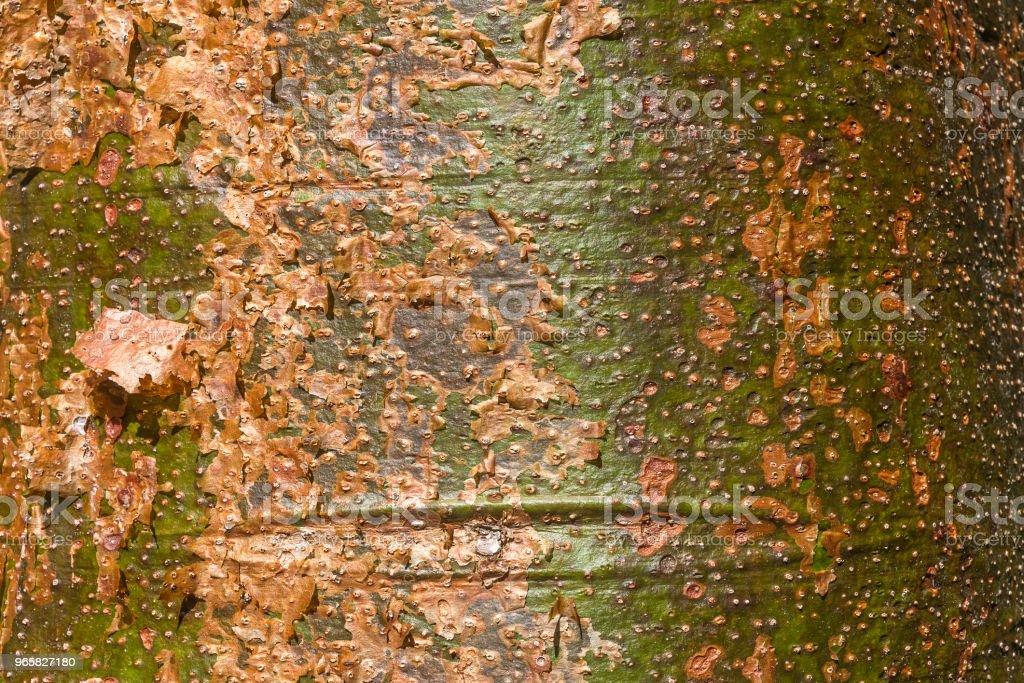 Natuurlijke kleuren - Royalty-free Abstract Stockfoto