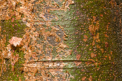 Natuurlijke Kleuren Stockfoto en meer beelden van Abstract
