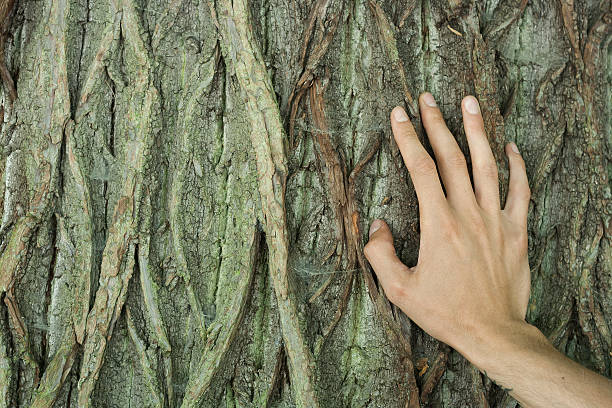 natural contact human hand on old tree bark tree hugging stock pictures, royalty-free photos & images