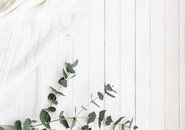 cosmétiques naturels et feuilles de fougère et d'eucalyptus sur un fond léger - cosmetique store photos et images de collection