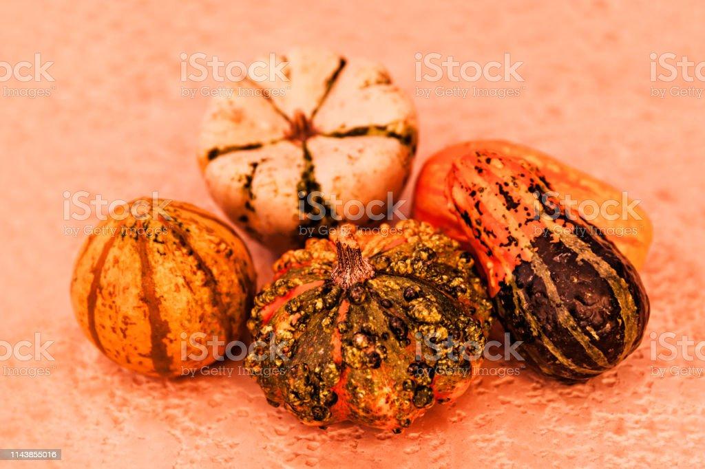 Natural Decorative Pumpkins In Fall At Sunset, Thanksgiving And Season Holiday Concept stock photo