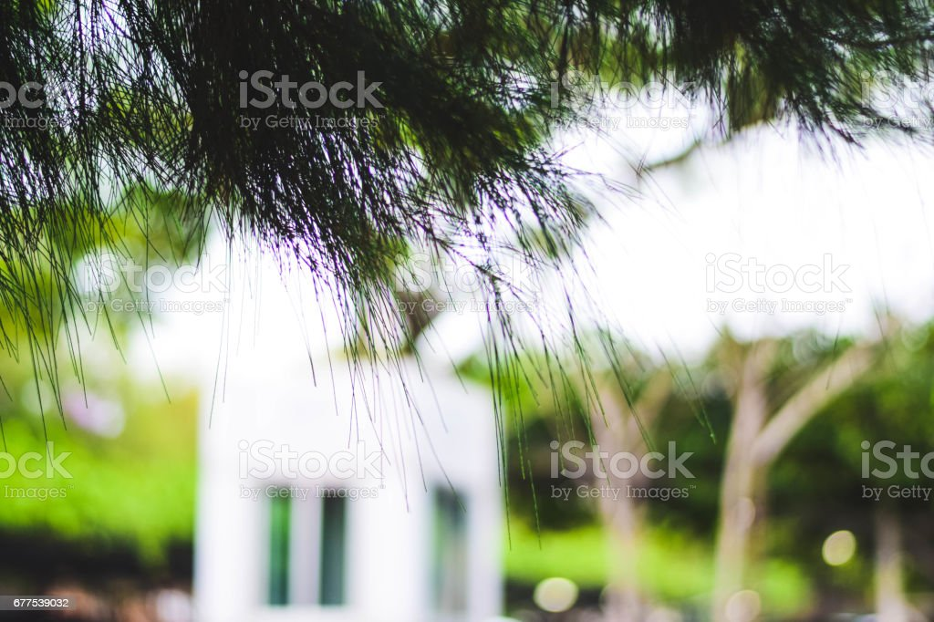 natural depth of field royalty-free stock photo