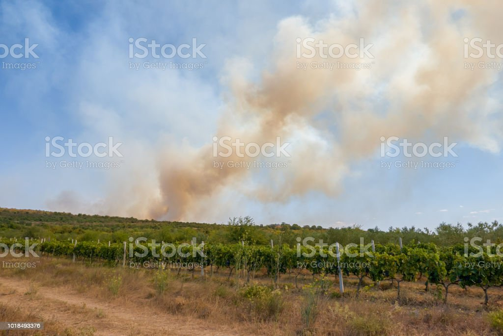 Natural disaster burning the crops