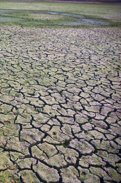 Natural dried soil surface with cracks photo stock photo