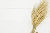 Natural dried wheat bunch on rustic white wood plank background, with copy space.