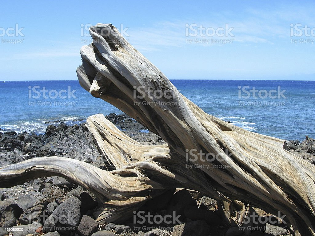 Natural driftwood sculpture royalty-free stock photo