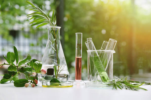 Natural drug research, Natural organic and scientific extraction in glassware, Alternative green herb medicine, Natural skin care beauty products, Laboratory and development concept. stock photo