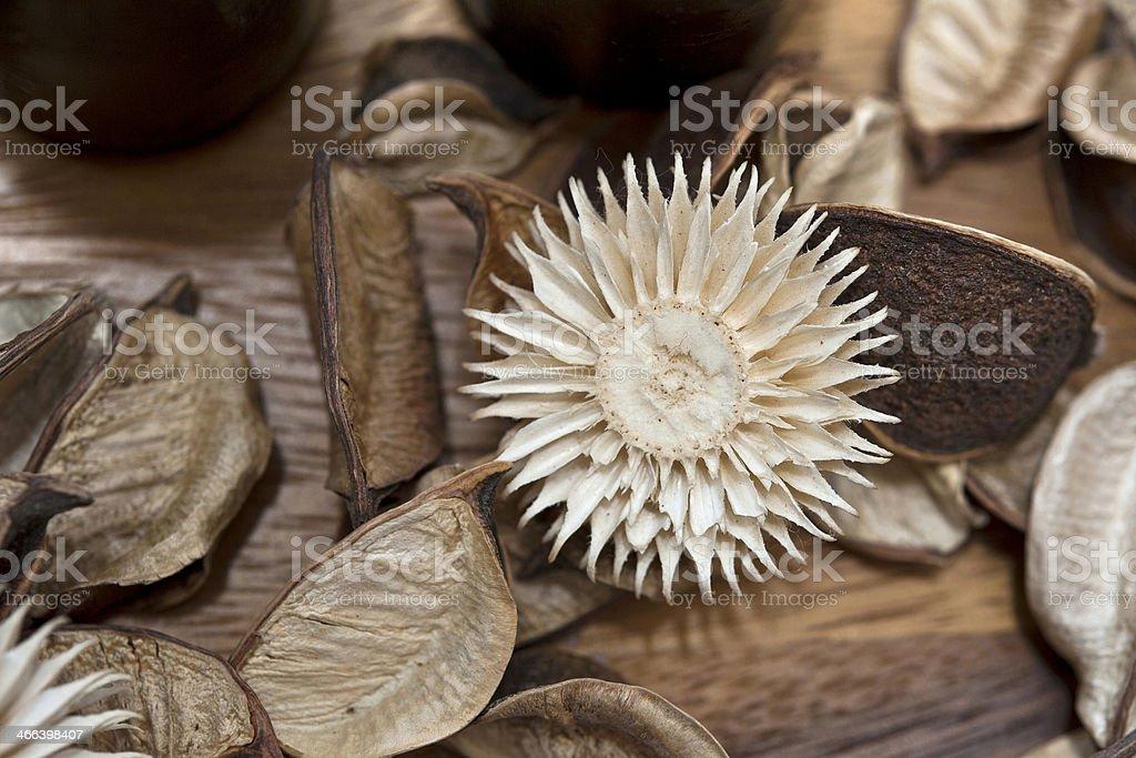 Natural dry flowers decor. Macro potpourri material.
