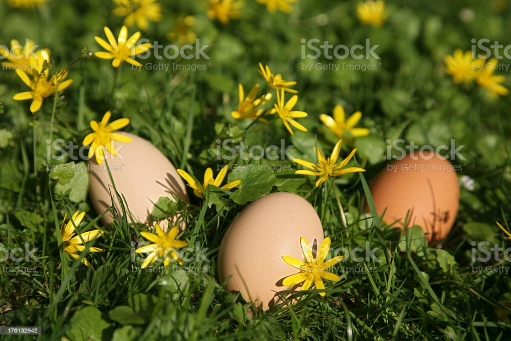 natural easter royalty-free stock photo