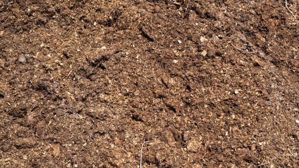 Fertilizante ecológico natural para o solo - estrume de cavalo. - foto de acervo