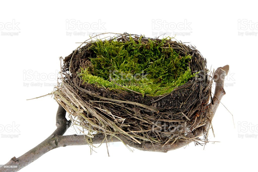 Natural empty nest on white royalty-free stock photo