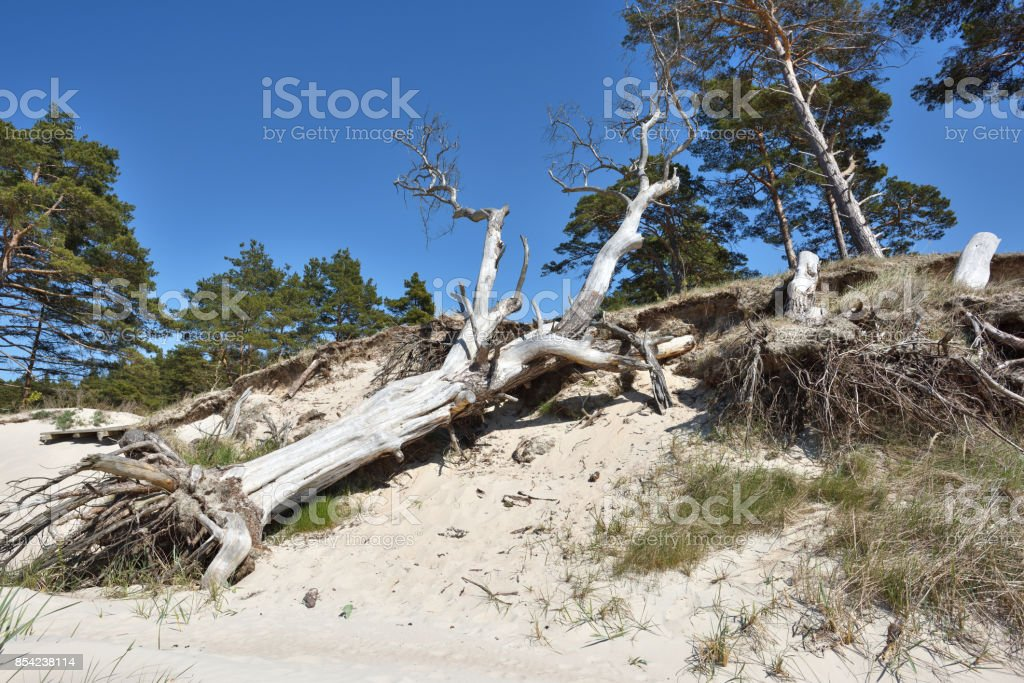 Natural erosion shore stock photo