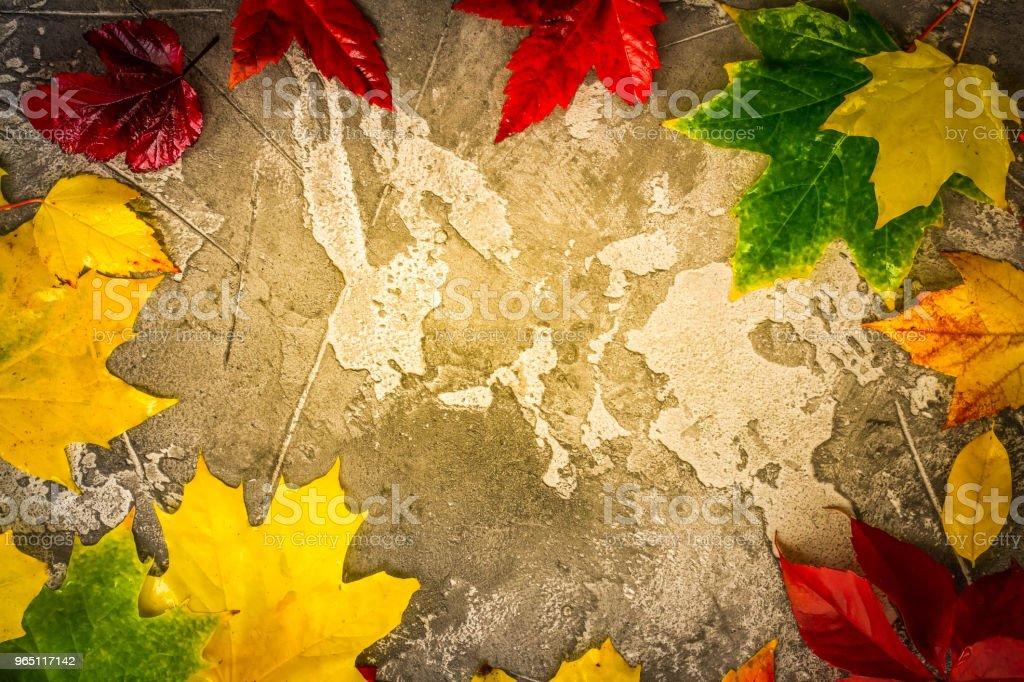 Natural fall leaves zbiór zdjęć royalty-free