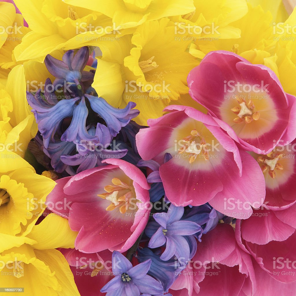 Natural Floral Beauty royalty-free stock photo