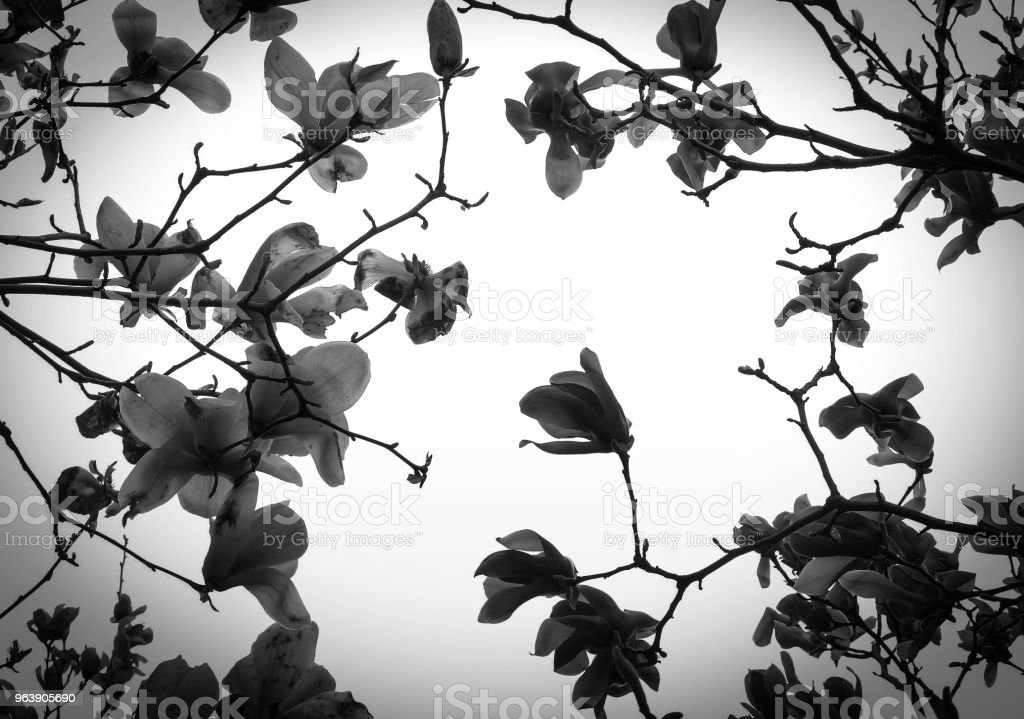 Natural flower black and white version. Can used for background and pattern. - Royalty-free Abstract Stock Photo