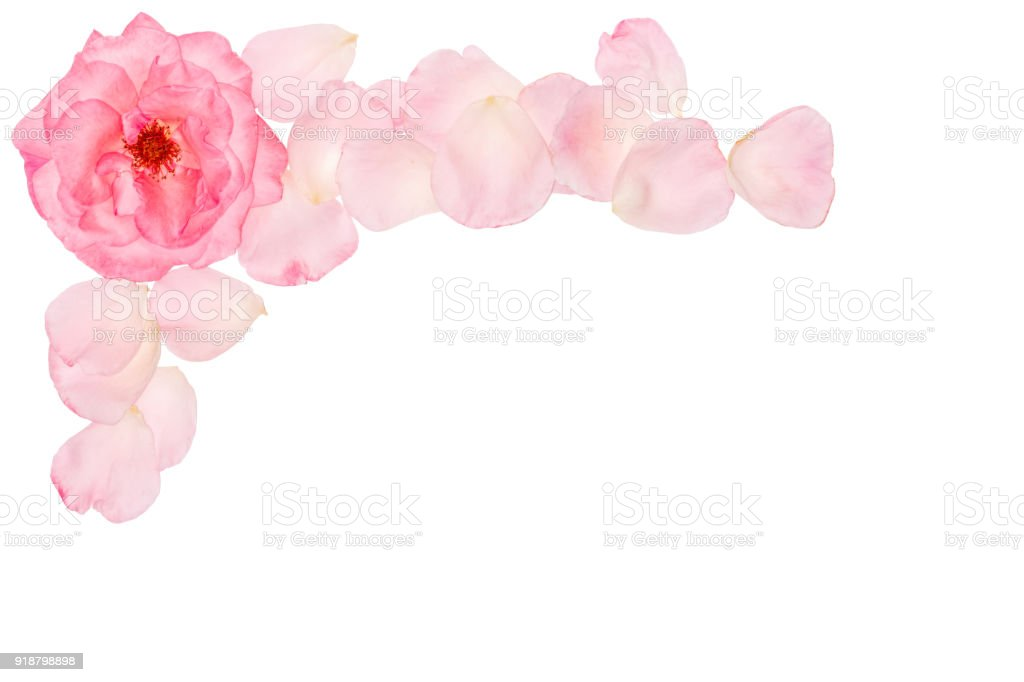 Natürlichen Blumen Set Schöne Blumen Clipartgrafiken Elegante ...