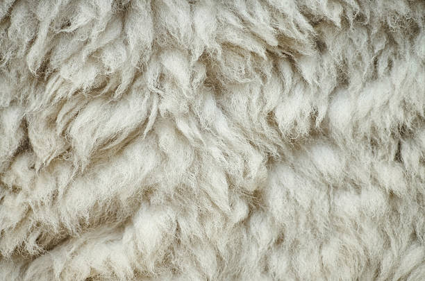 natural fluffy flat sheep skin background texture - wool stock photos and pictures