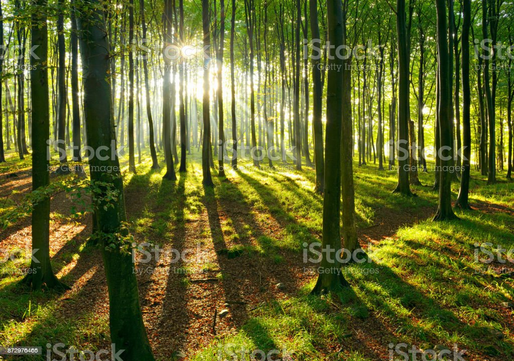 Natürlichen Wald von Buche von Sonnenstrahlen durch Nebel beleuchtet – Foto