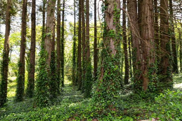 Naturwaldpark Pena in Sintra, Portugal, mit Bäumen und Steinen – Foto