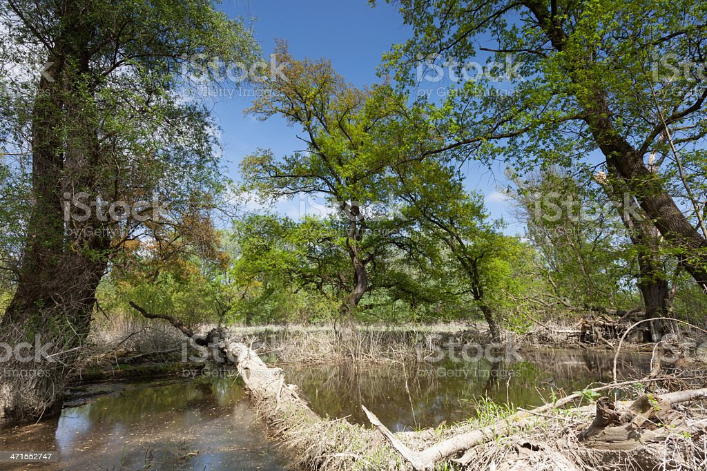 Natural forest royalty-free stock photo