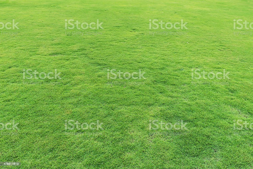 Natural fresh green grass field stock photo