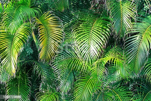 1145104190 istock photo Natural garden wall of decorative palm trees, tropical view. 1033723886