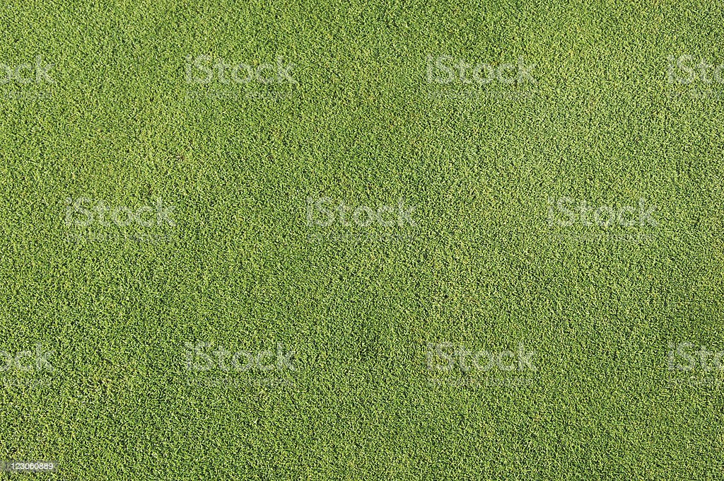 Natural golf grass background stock photo