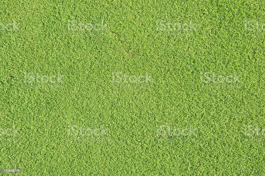 Natural golf grass royalty-free stock photo