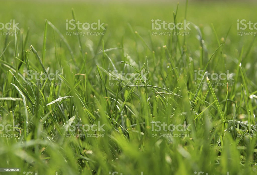 Natural grass background with bokeh stock photo