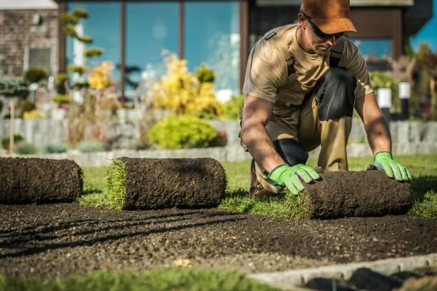 natürliche grasinstallation - gartenbau betrieb stock-fotos und bilder