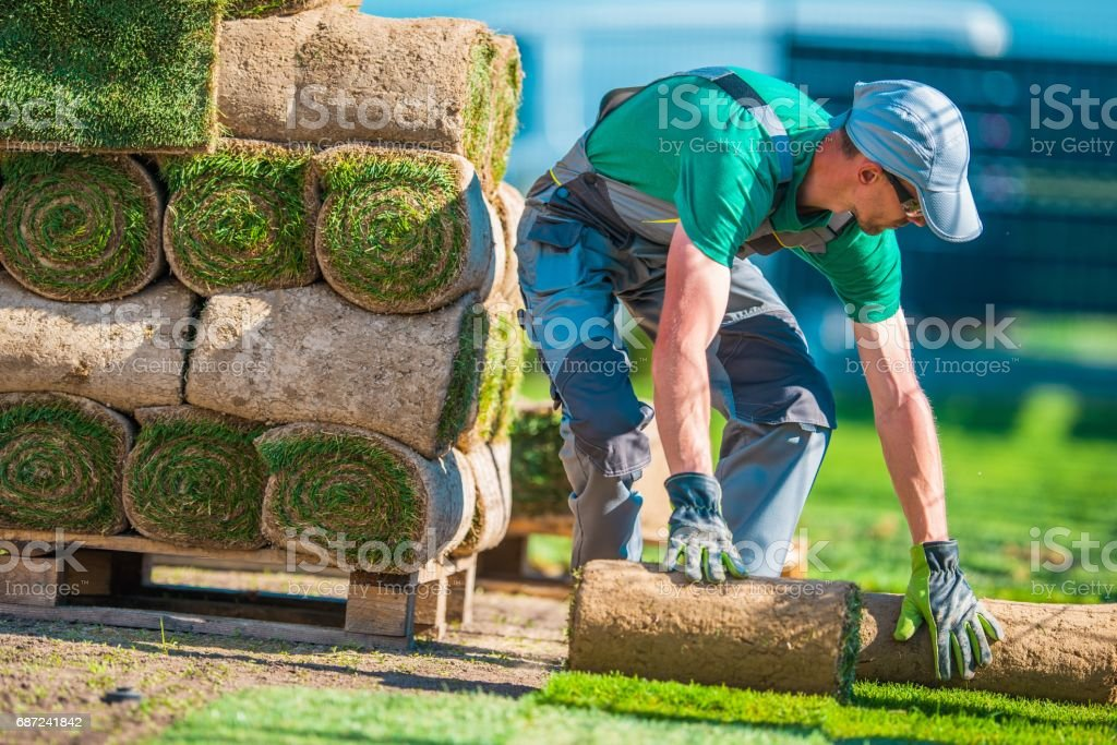 Natural Grass Turf Installer stock photo