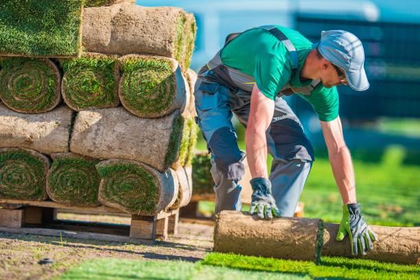 natural grass turf installer - giardinaggio foto e immagini stock