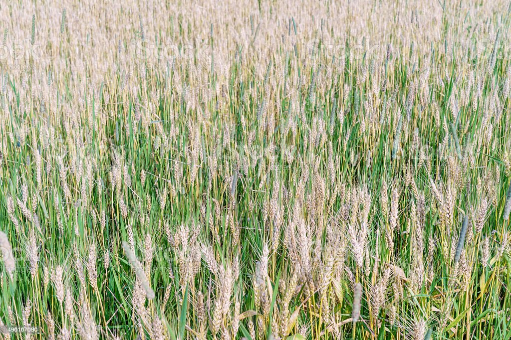 Natural grassy summer background stock photo
